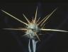 centaurea_solstitialisosthafen1967_kb_ausschnitt_122_b1c16f.jpg